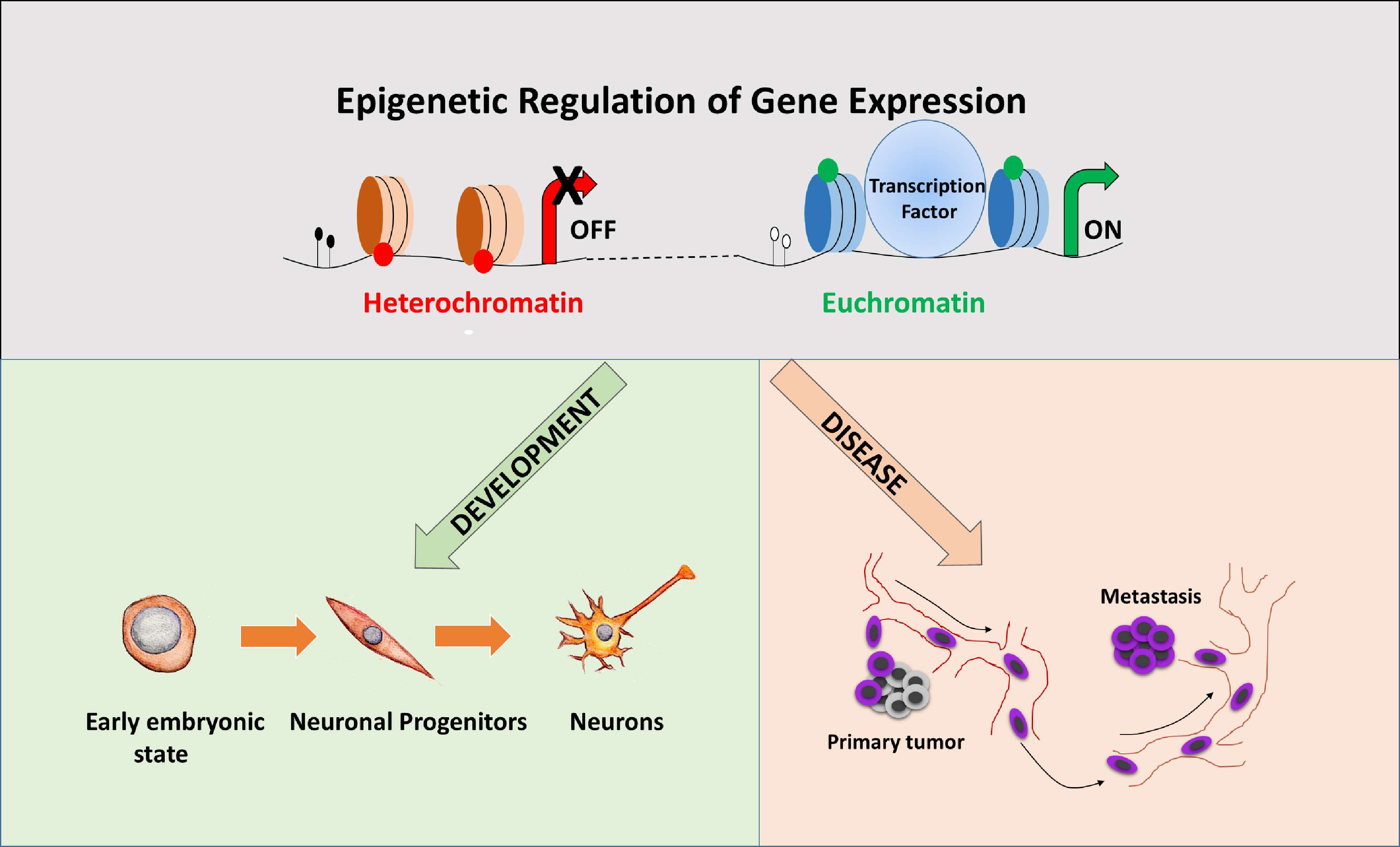 epigenetic gene expression and regulation pdf